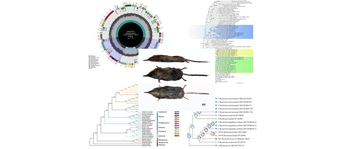 """""""大别山生物多样性综合科学考察""""项目近期工作进展"""