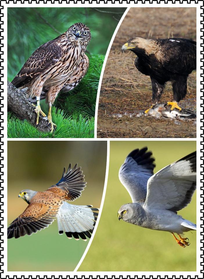 对宣传和保护我国珍稀濒危鸟类将启到积极的促进作用,将为普及动物